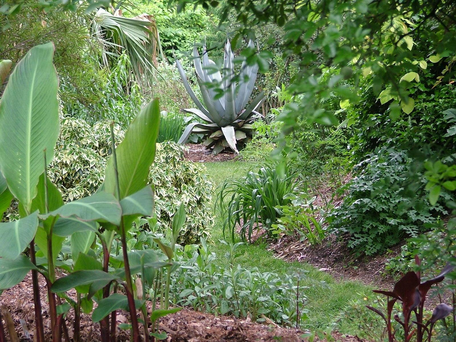 Plant Delights Nursery Open House Dscf4207 Jpg