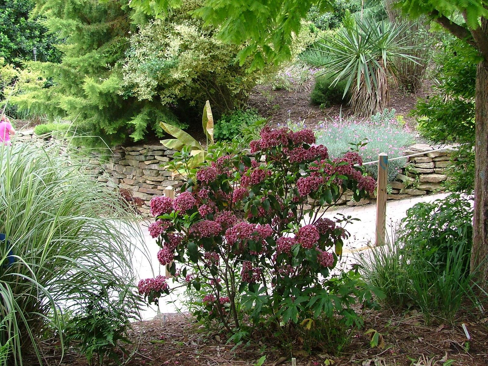 Plant Delights Nursery Open House Dscf4197 Jpg