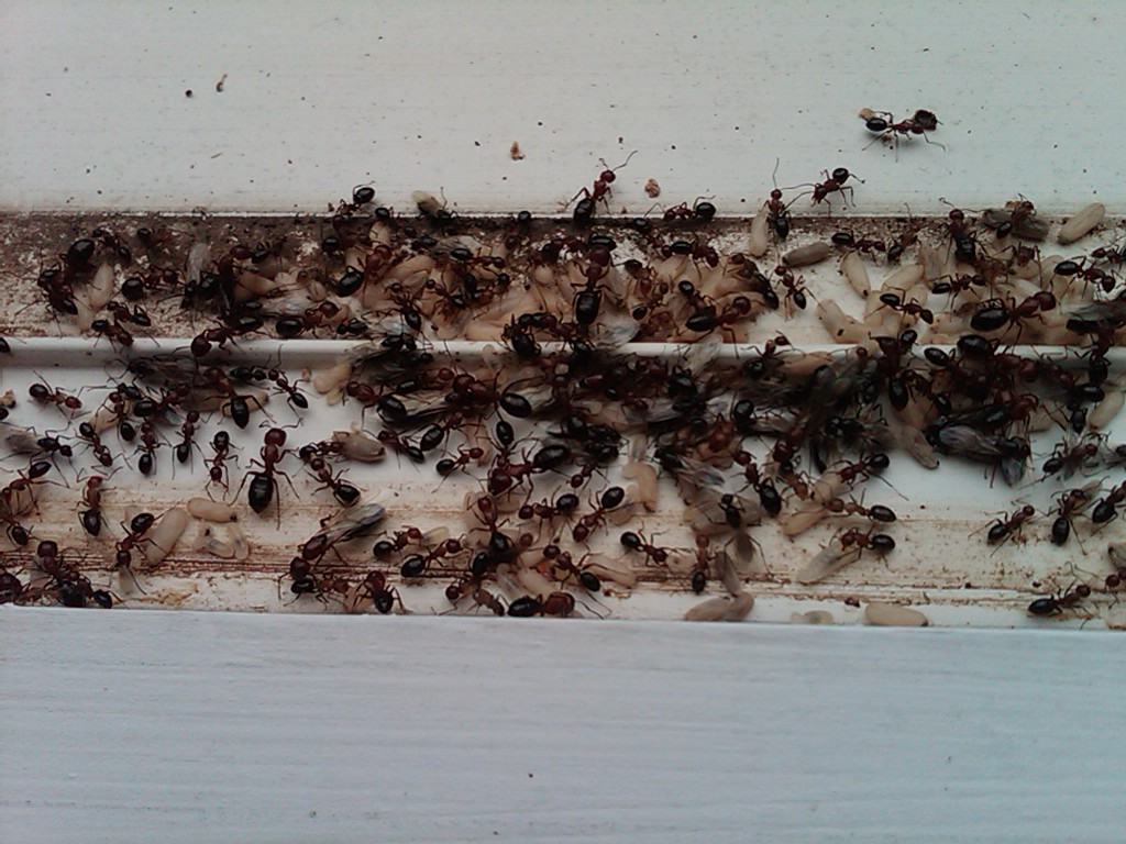 Pest control courses sydney, ants bathroom drain, pest ...