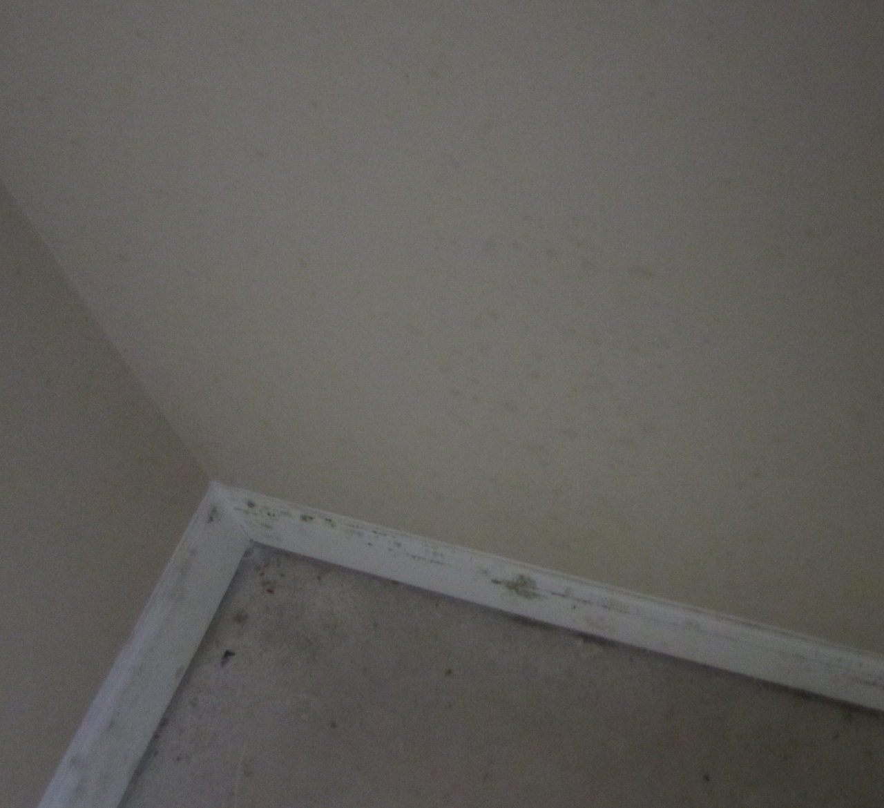 Black dots on bathroom ceiling - Newly Built Home Grease Spots On Walls Img_0347 1280x1170 Jpg