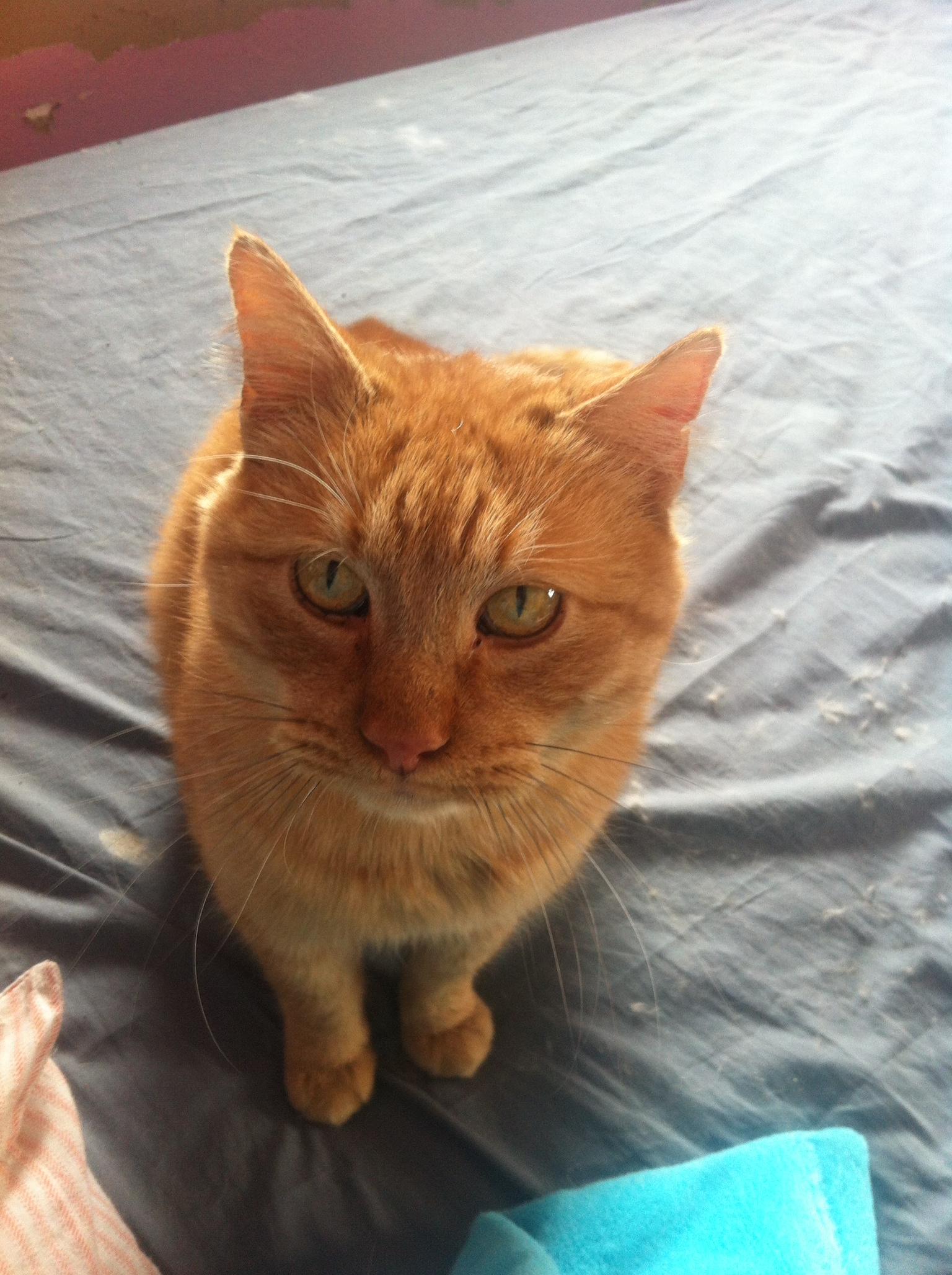 136907d1412027632 boyfriend obsessed his cat red1 Heutig 1. Neueste Alleinlebender Frauen leer Wiesbaden kennenlernen Tori.