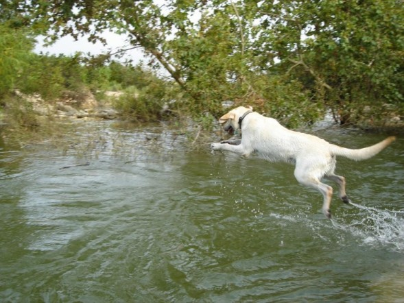 Where Can I Take My Dog To Swim Sport Inpiration Gallery