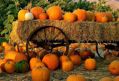 Pumpkin Patch Places San Antonio Garden Ridge Anton