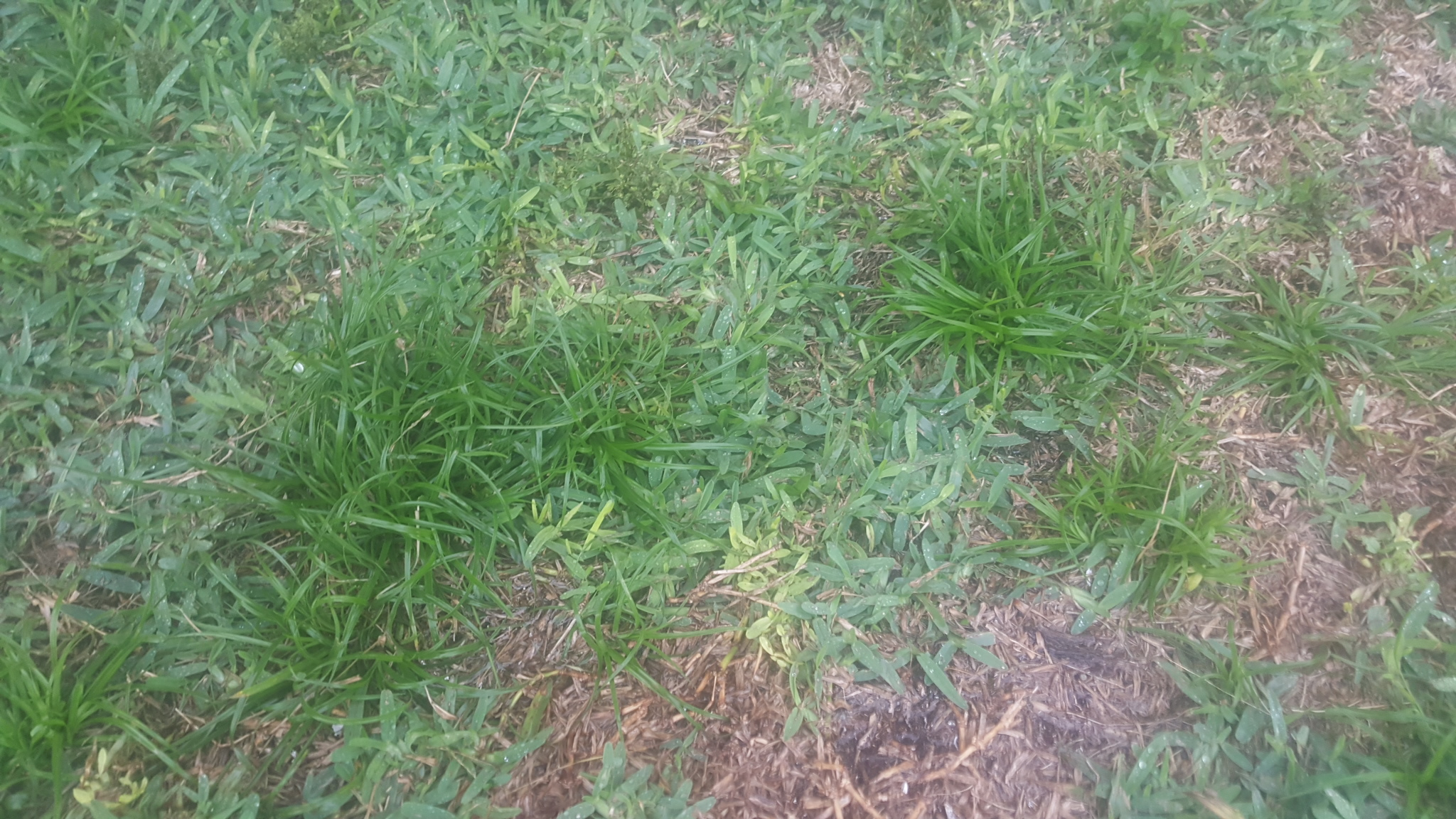 Lawn Problems In North Port Help Sarasota 2015 Homes