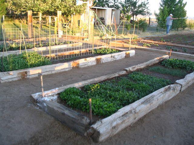 When should I plant my garden in Cedar City Utah Clinton – What Should I Plant in My Garden