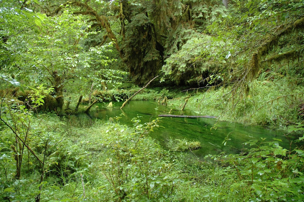 Vacation on the olympic peninsula washington wa page for Cabin rentals olympic national forest