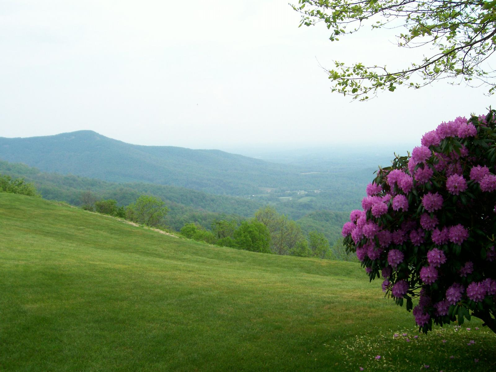 Spring In The Mountains Asheville Best Time Areas Weather