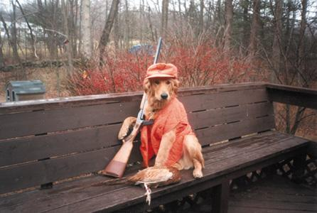 http://www.city-data.com/forum/members/arguy1973-89923-albums-redneck-dogs-pic6101-redneck-hunting-dog.jpg