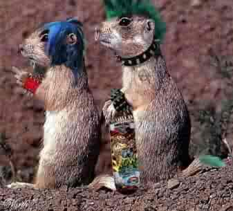 http://www.city-data.com/forum/members/brenda-starz-328928-albums-brenda-s-funny-squirrel-comment-pic-s-pic5075-punk-squirrels.jpg