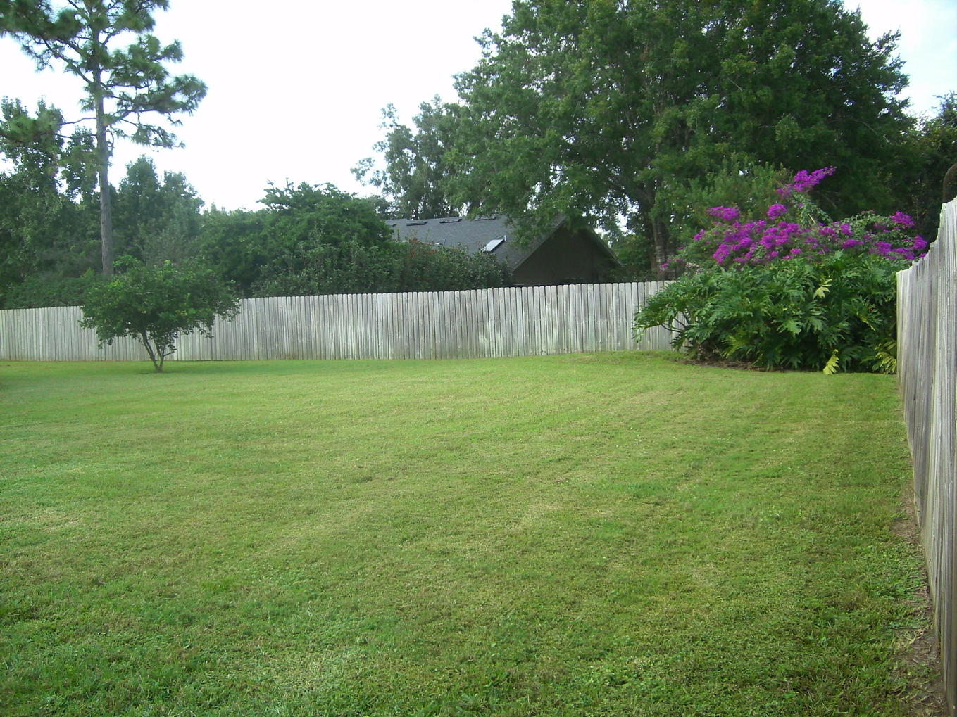 Superb Lush Backyard  Please Contact Me At Regina20003@yahoo.com Or Via Cell @