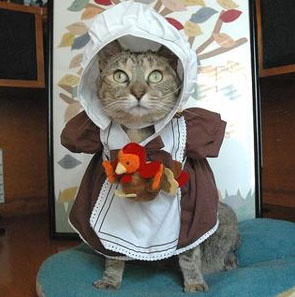 Happy Thanksgiving To The Kitties And Kitty Lovers Ive Found On CD PIC Time