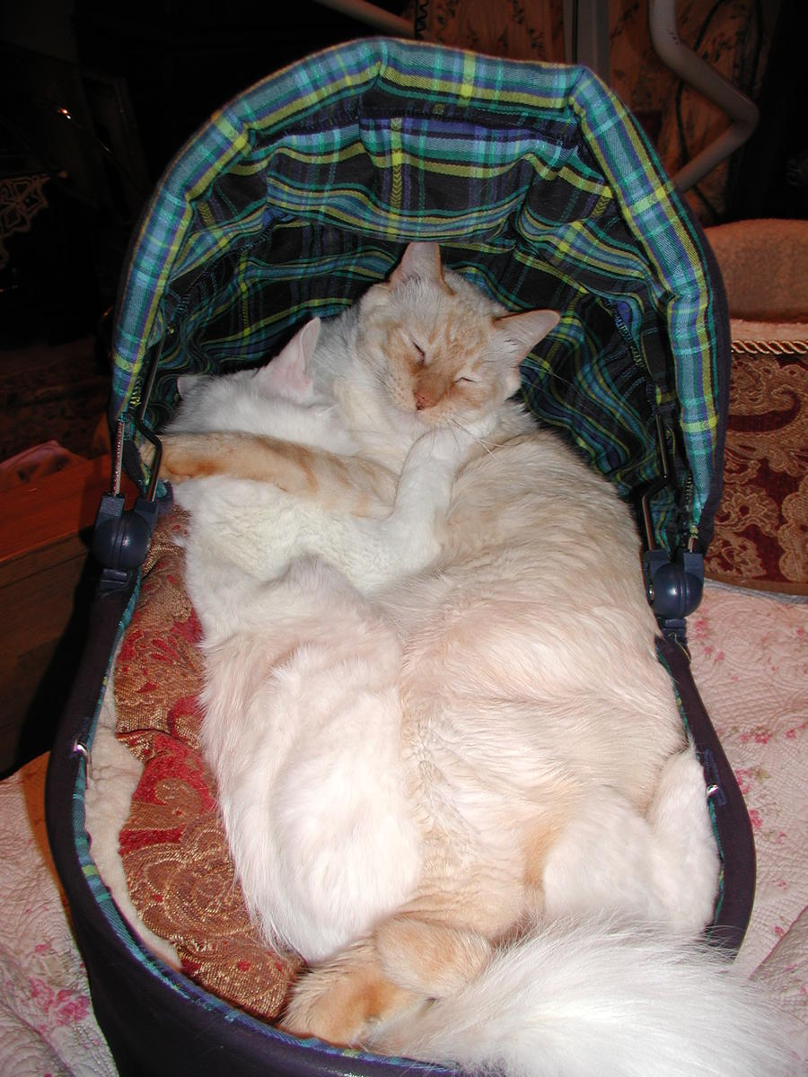 This is my Tumnus sleeping in a baby doll basinet with my beloved Rufus.  They used to sleep together, bathe each other and in general enjoyed life.