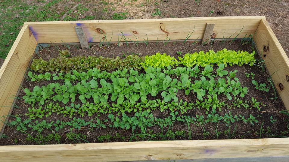 2016 North Carolina Vegetable Gardening (flowers Containers Cucumbers Plants) - Trees Grass ...