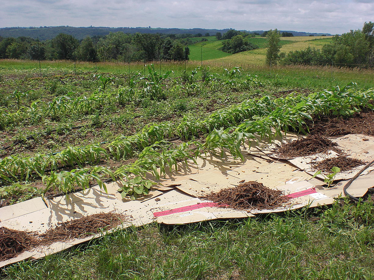 turn moving waste into cardboard mulch