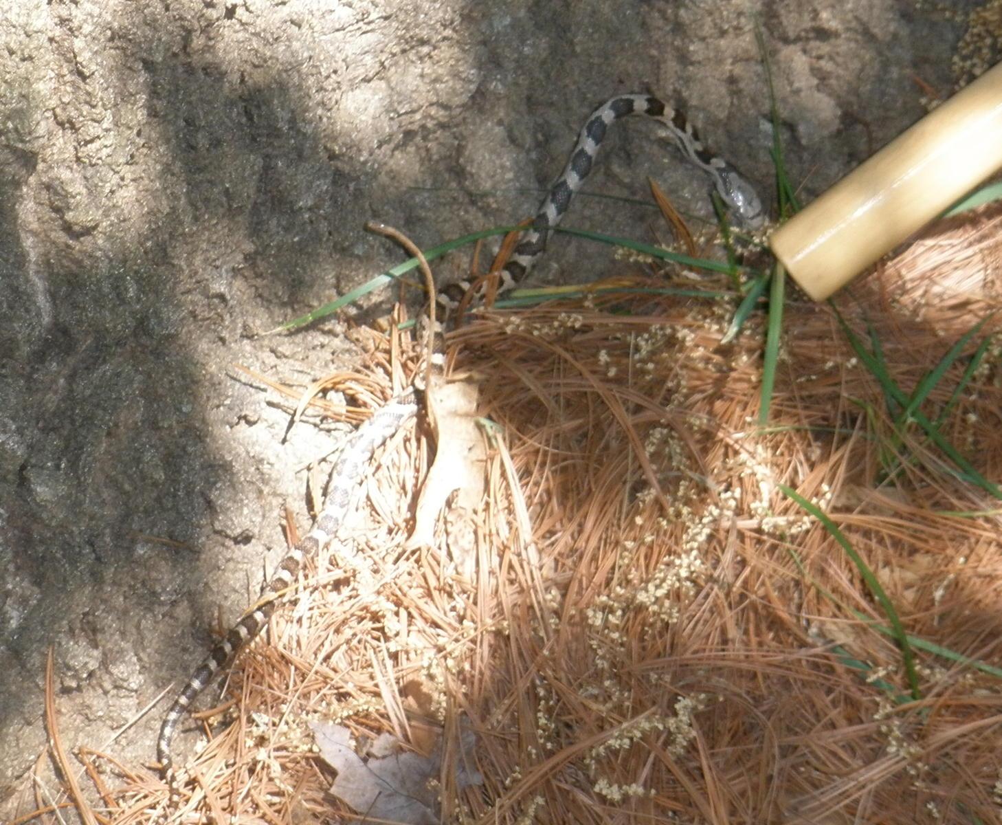 Snake Pinata