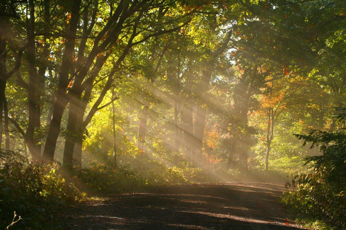 sunshine fog trees 1