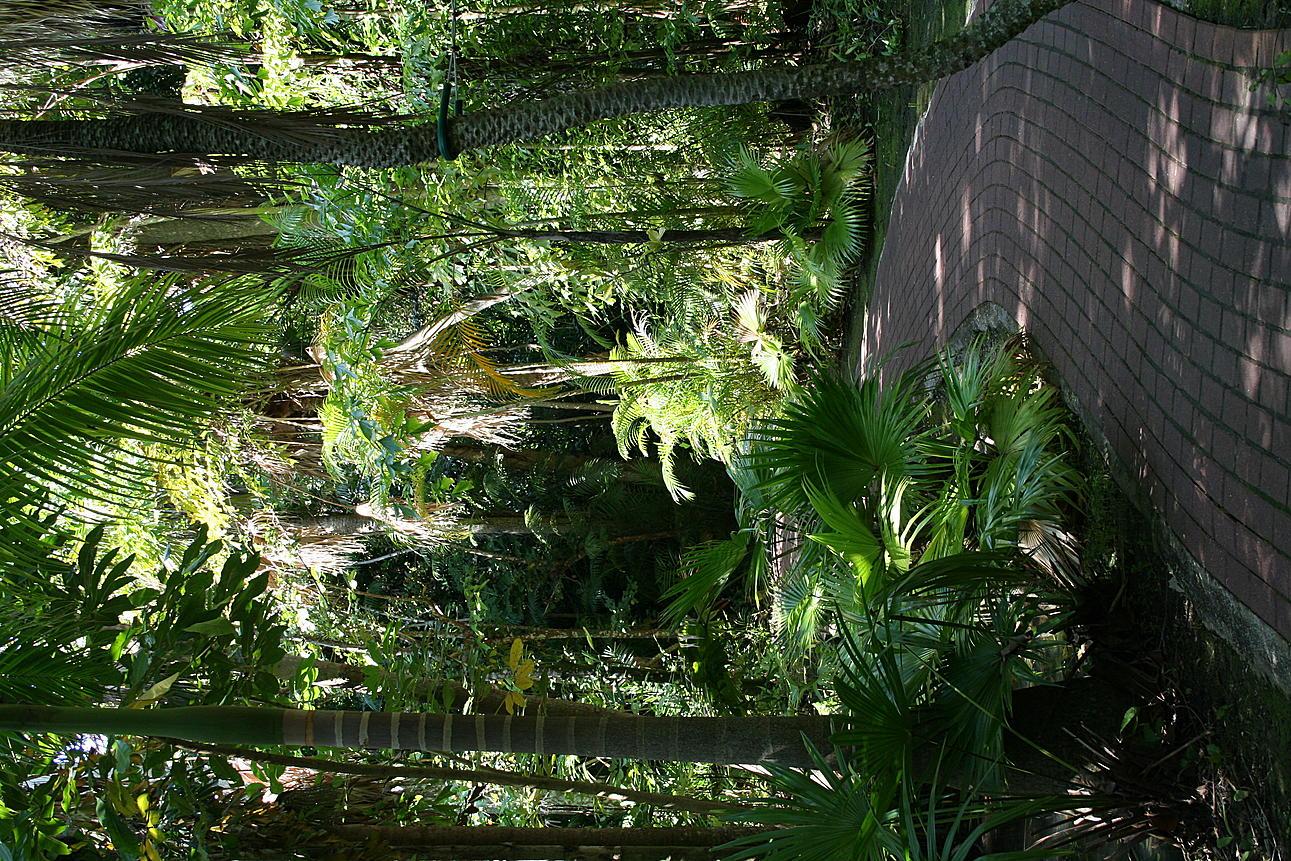 Soflgal 39 S Album Sarasota Jungle Gardens Picture City