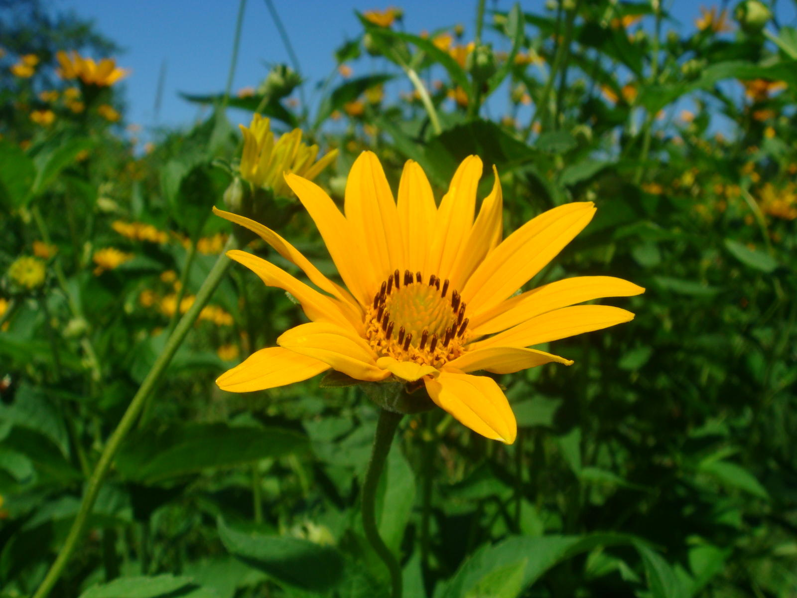 Stevenkrzaks Album Flowers In Illinois Picture City Data Forum