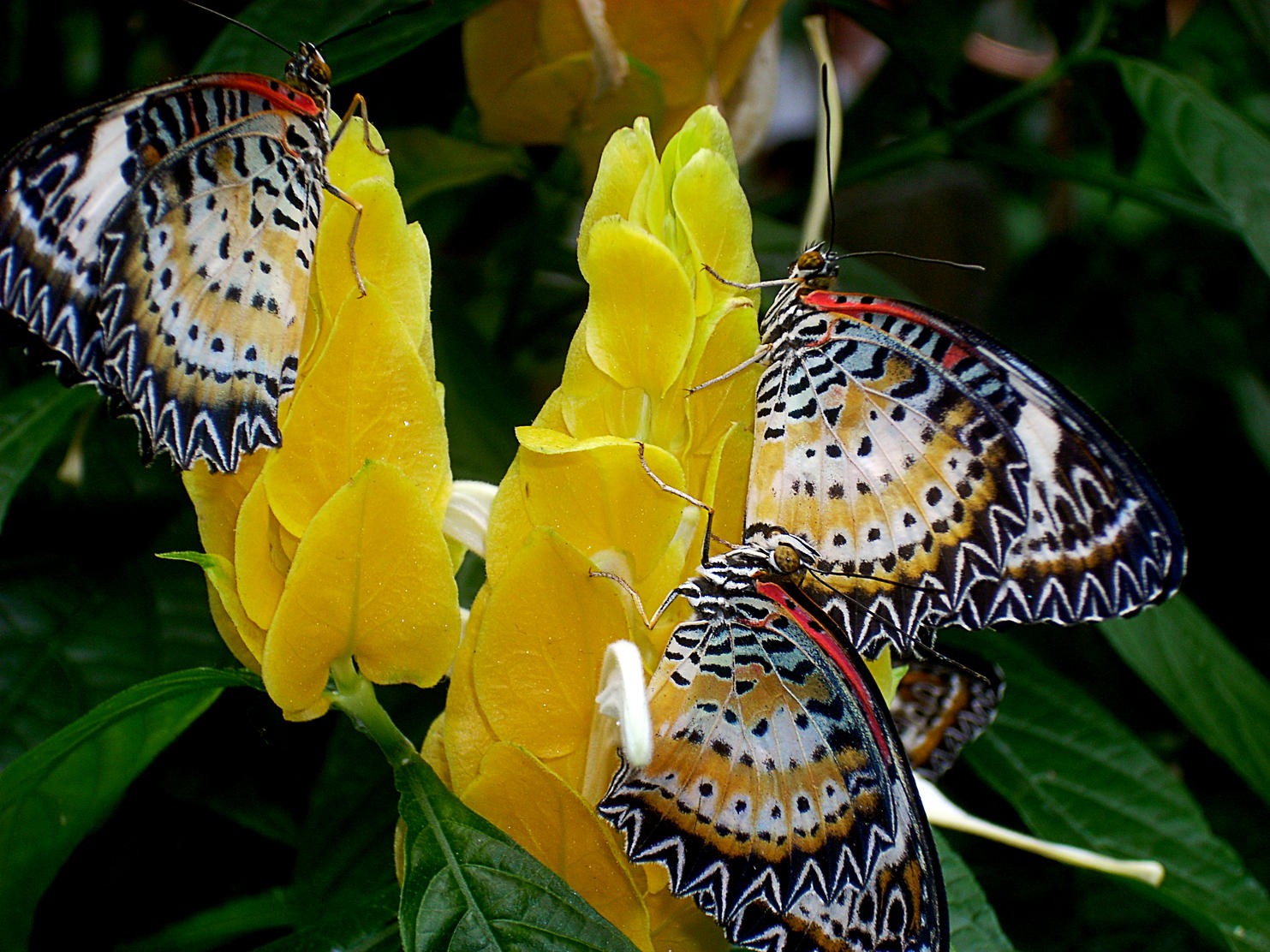 Pictures Of Butterflies And Flowers