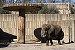 Elephant carrying her hay - Memphis Zoo (c) bjh