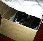 Cat pics cat