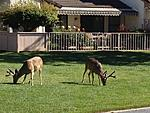 Our neighbors are wildlife - deer, ducks, geese, bird sanctuary, etc.