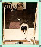 Jetta practice for Recall over Jump UKC