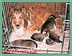 Julie & her pups
