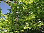 Web Botanical Gardens0014