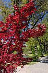 Web Botanical Gardens0001