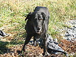 Sandy, dumped on the Blue Ridge Parkway, with a note in a ziplock bag that said she was 10 yrs old and needed a new hom.  She became a permanent...