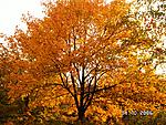 New Hampshire, Fall 2006