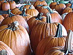 pumpkin hunting 015
