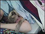 frodo kitteh