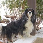 Casey in the snow