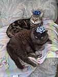 Snickers and Smokey ready to party!