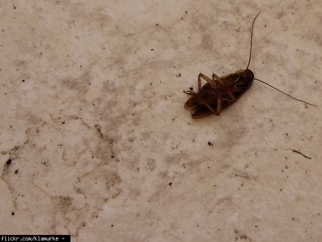 Omg Huge Cockroach In My Kitchen Home Depot Drain