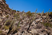 Arizona Desert: Sabino Canyon in Tucson