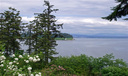 Camano Island\'s Eagles Nest