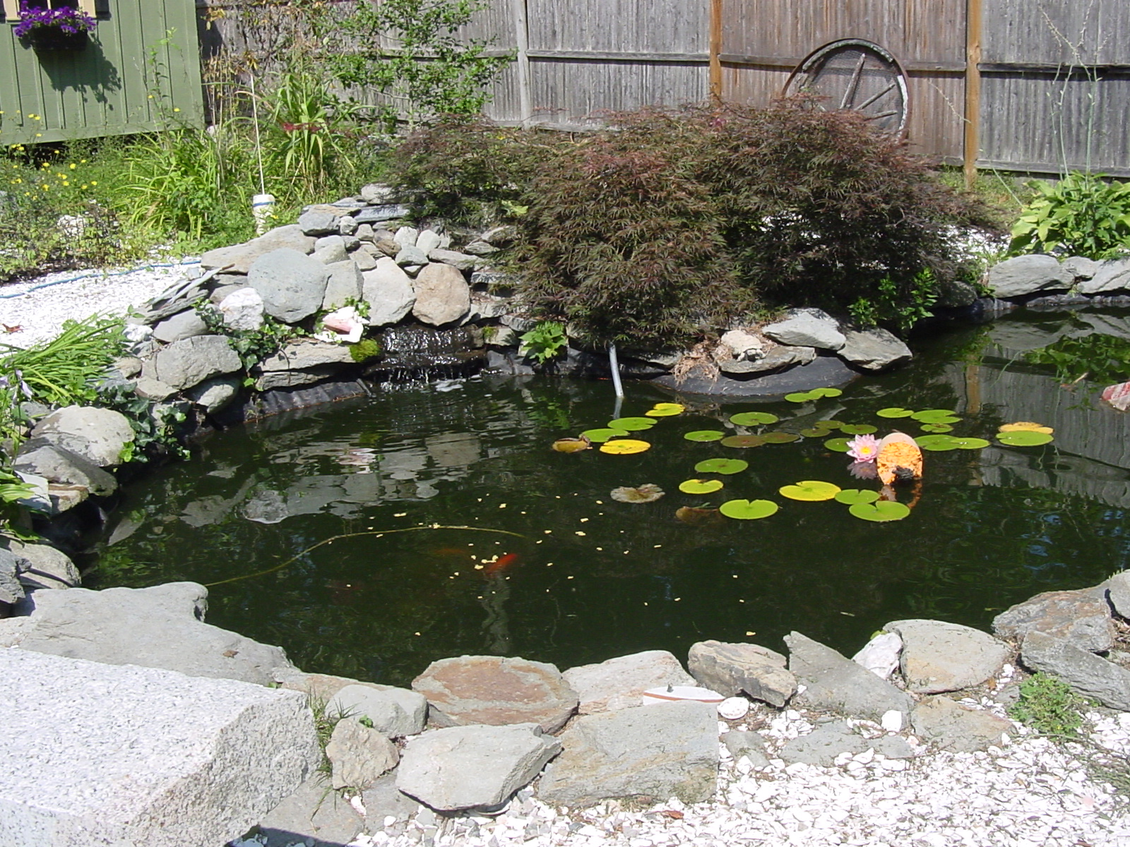 Pond Pix tp share? (squirrel, front yard, planting, weed ... on Front Yard Pond id=20466