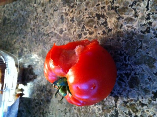 Do Rats Eat Tomatoes Shapeyourminds Com