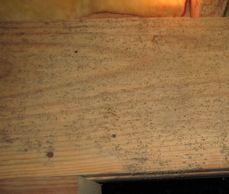 Pictures Of Black Mold On Floor Joists Carpet Vidalondon