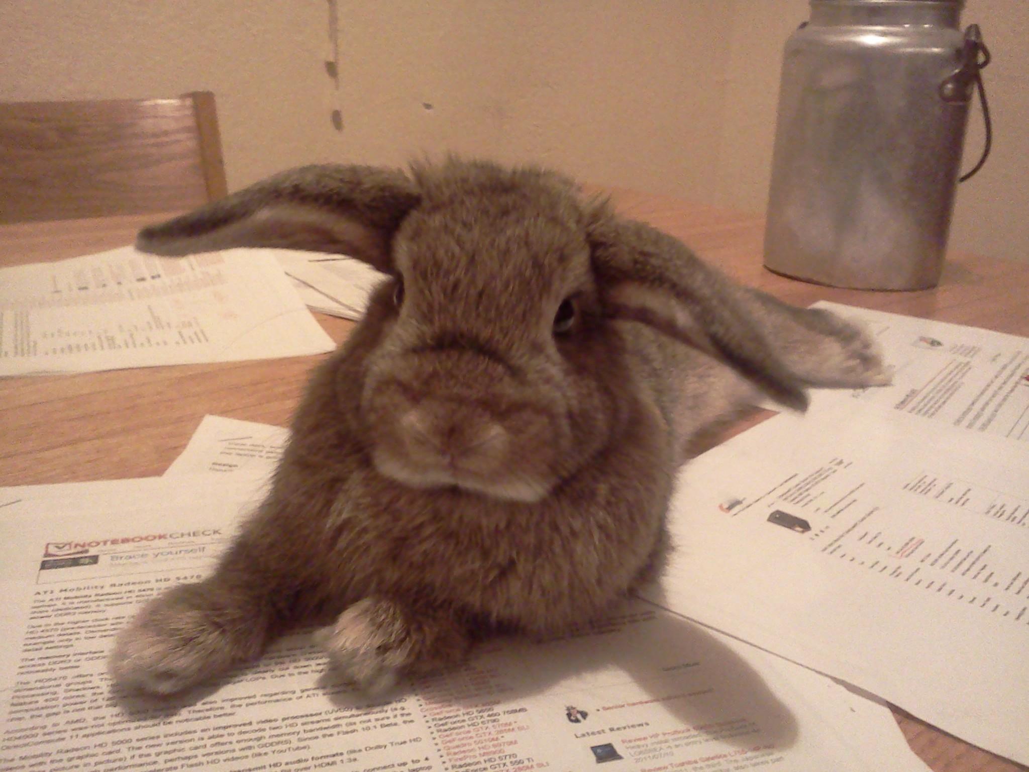 Rabbit Login
